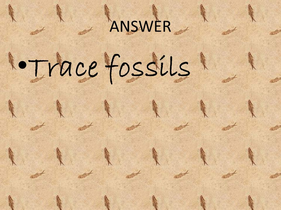 ANSWER Trace fossils