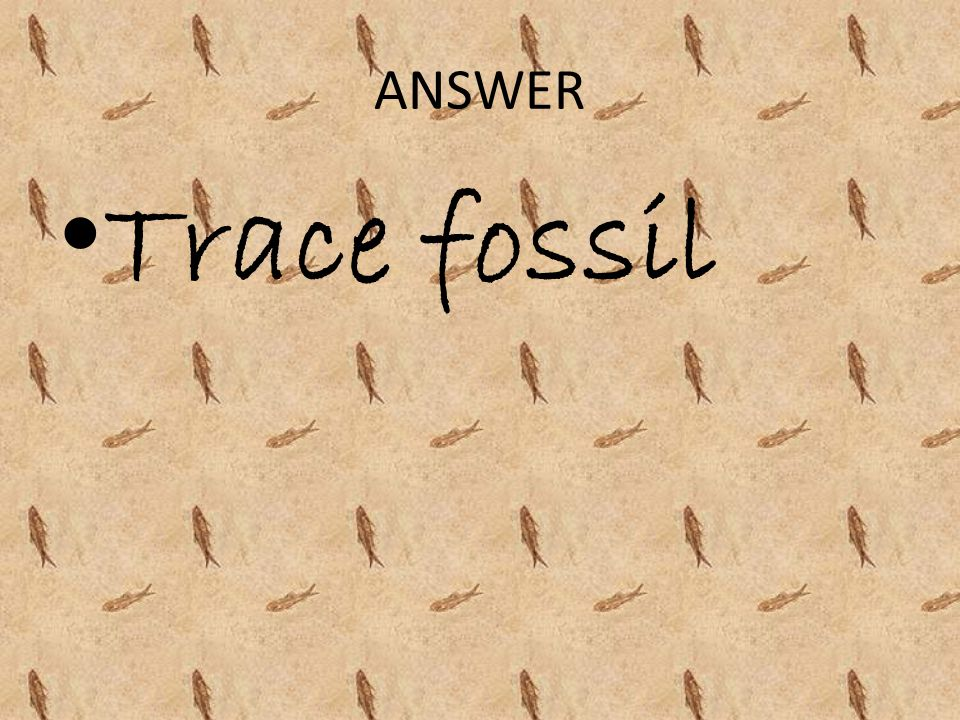 ANSWER Trace fossil