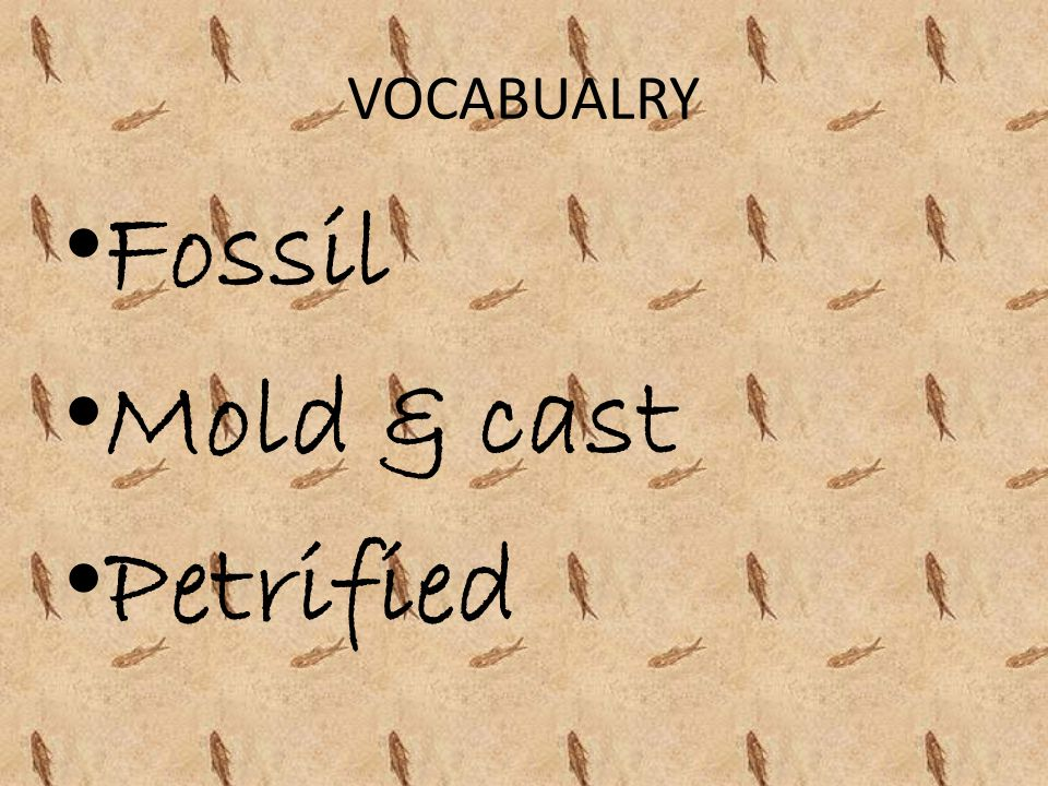 VOCABUALRY Fossil Mold & cast Petrified