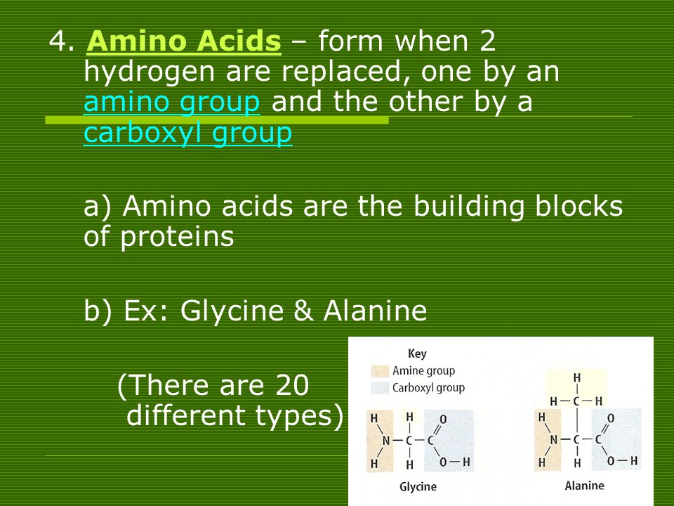4. Amino Acids – form when 2 hydrogen are replaced, one by an amino group and the other by a carboxyl group
