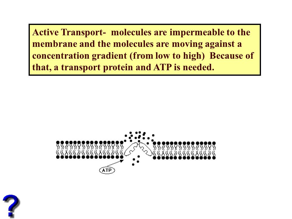 Active Transport- molecules are impermeable to the membrane and the molecules are moving against a concentration gradient (from low to high) Because of that, a transport protein and ATP is needed.