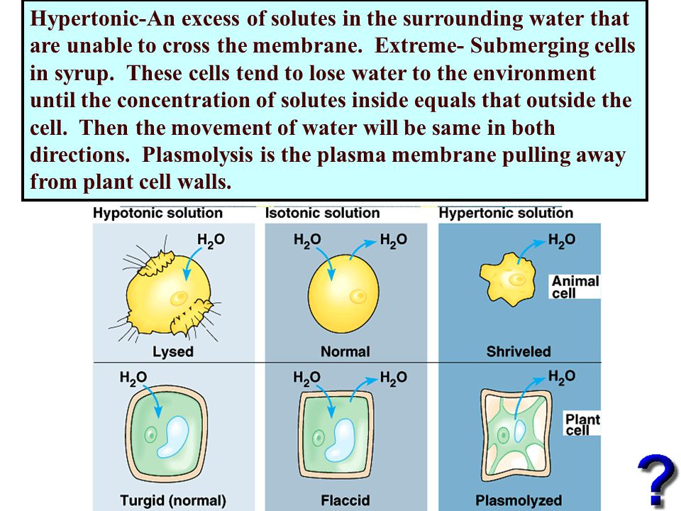 Hypertonic-An excess of solutes in the surrounding water that are unable to cross the membrane.
