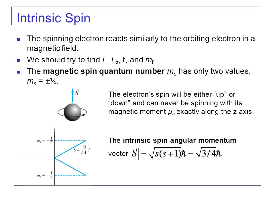 Intrinsic Spin The spinning electron reacts similarly to the orbiting electron in a magnetic field.