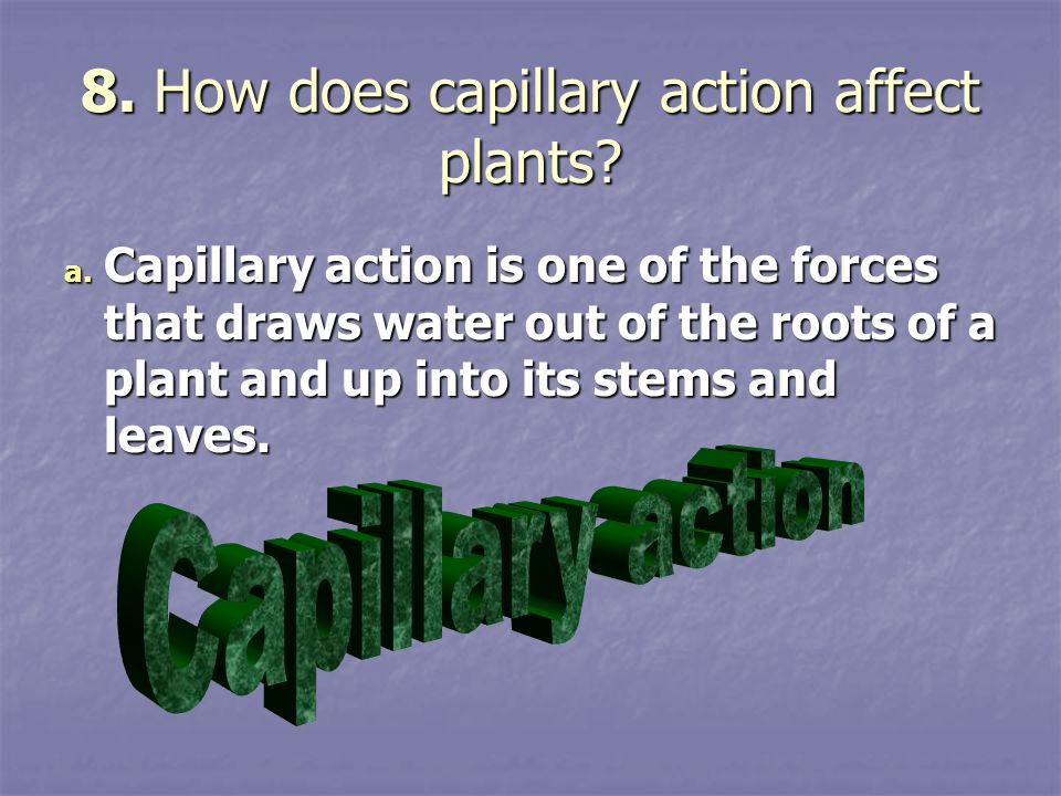 8. How does capillary action affect plants