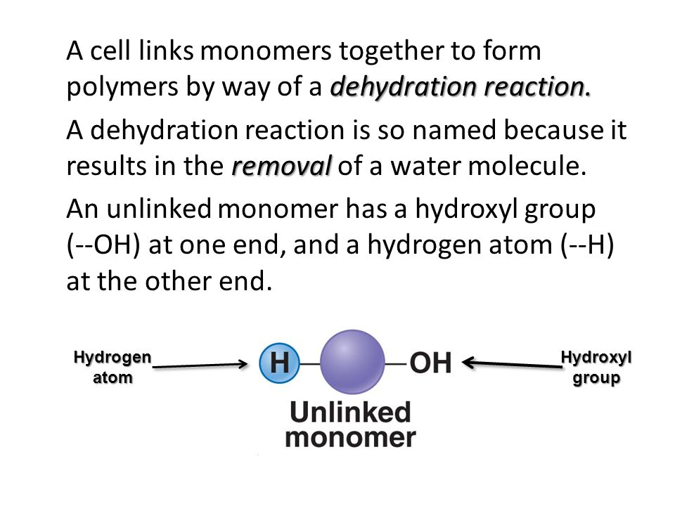 A cell links monomers together to form polymers by way of a dehydration reaction. A dehydration reaction is so named because it results in the removal of a water molecule. An unlinked monomer has a hydroxyl group (--OH) at one end, and a hydrogen atom (--H) at the other end.