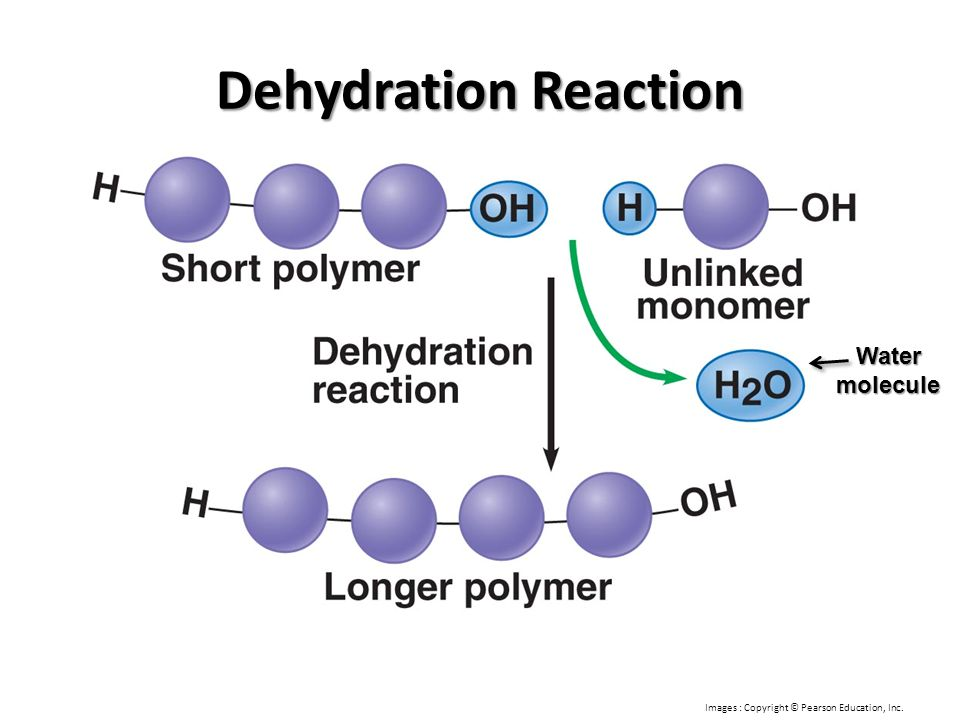 Dehydration Reaction Water molecule