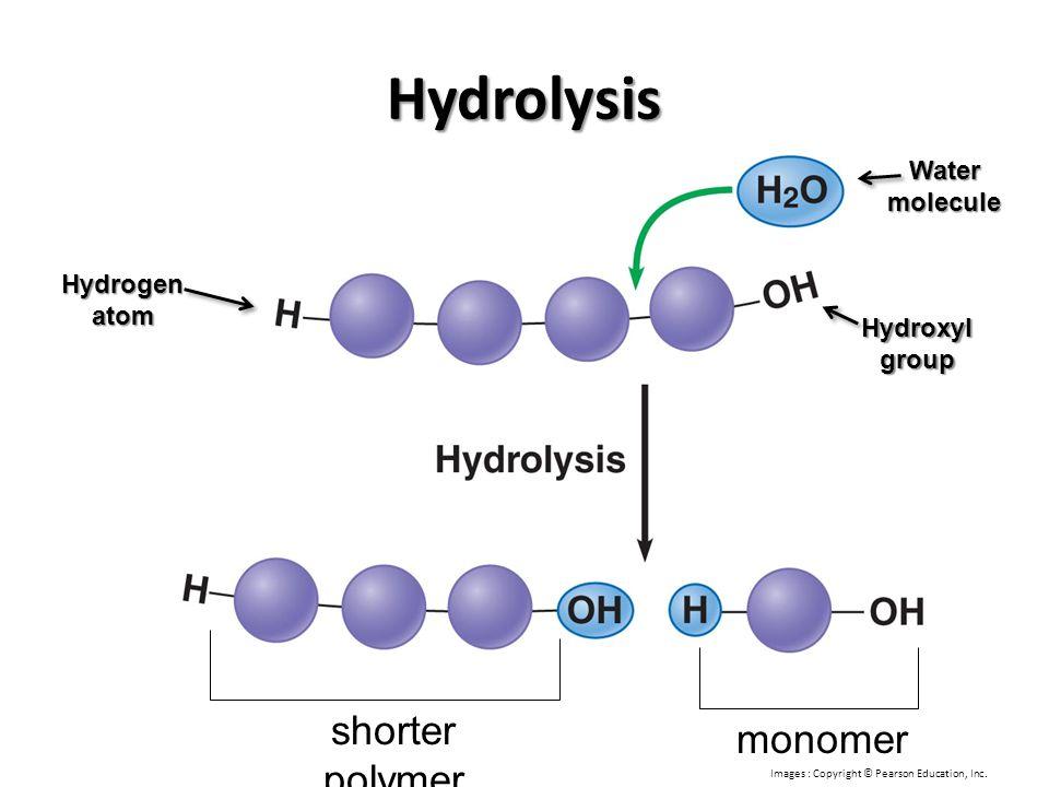 Hydrolysis shorter polymer monomer Water molecule Hydrogen atom