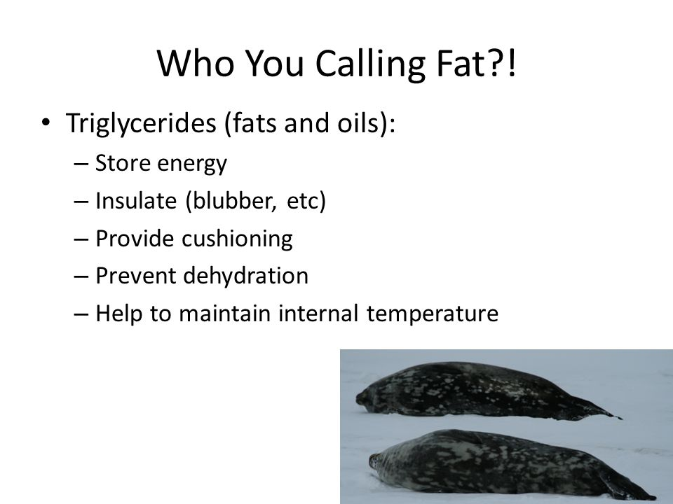 Who You Calling Fat ! Triglycerides (fats and oils): Store energy