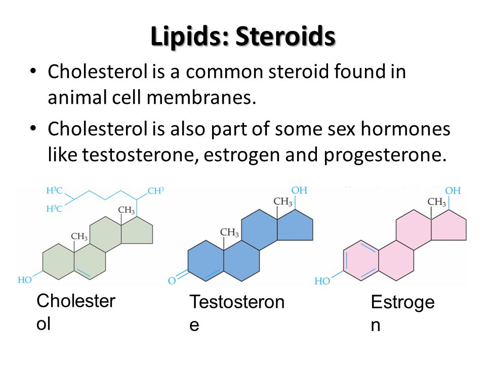 Lipids: Steroids Cholesterol is a common steroid found in animal cell membranes.