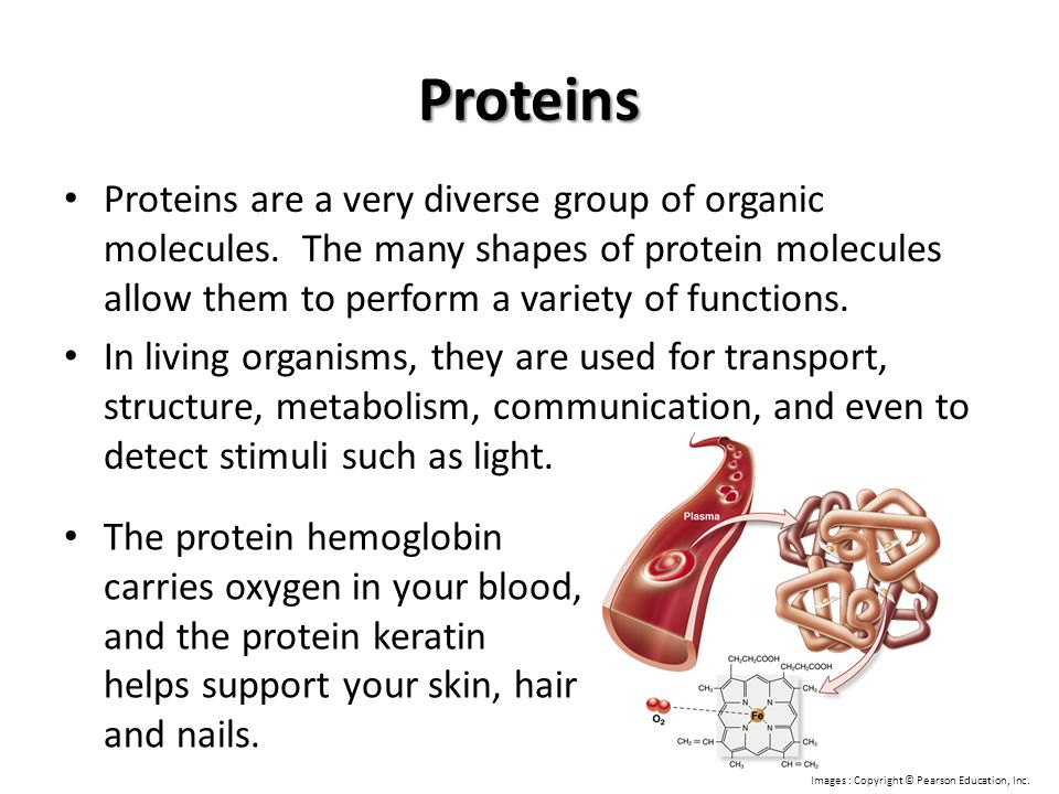 Proteins Proteins are a very diverse group of organic molecules. The many shapes of protein molecules allow them to perform a variety of functions.