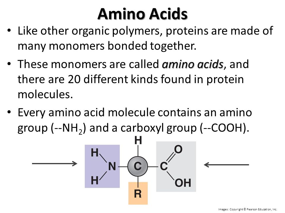 Amino Acids Like other organic polymers, proteins are made of many monomers bonded together.