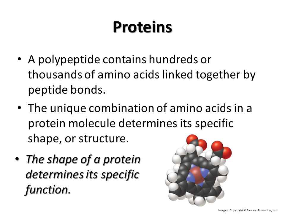 Proteins A polypeptide contains hundreds or thousands of amino acids linked together by peptide bonds.