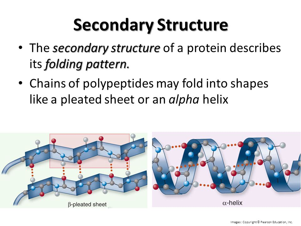 Secondary Structure The secondary structure of a protein describes its folding pattern.