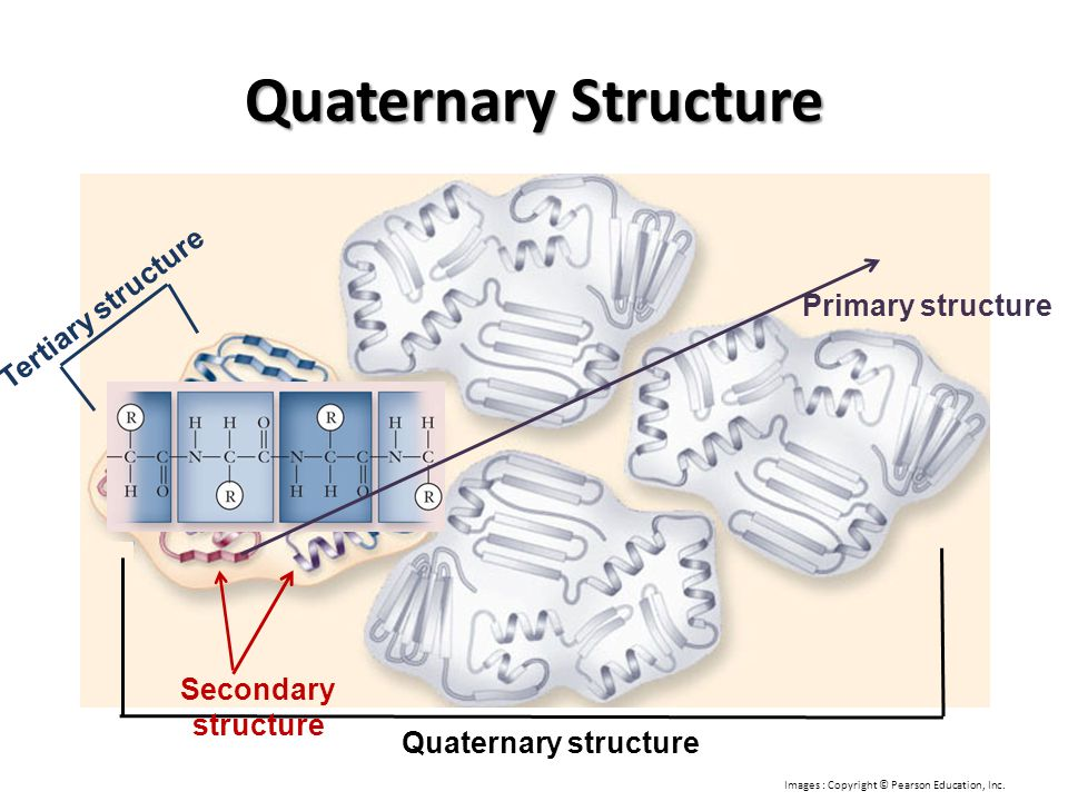 Quaternary Structure Tertiary structure Primary structure