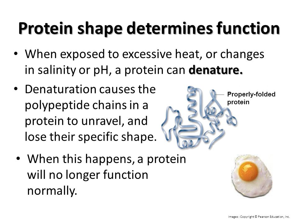 Protein shape determines function