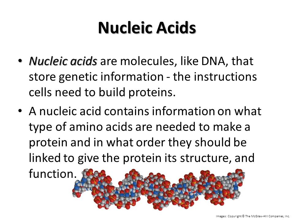 Nucleic Acids Nucleic acids are molecules, like DNA, that store genetic information - the instructions cells need to build proteins.