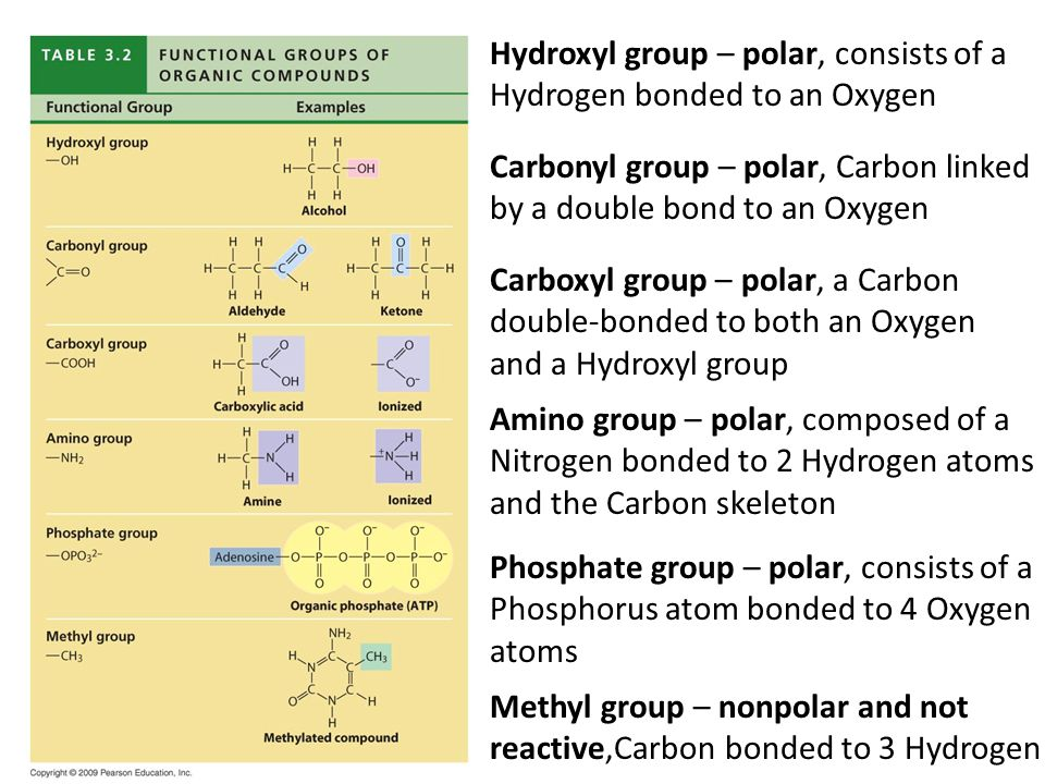 Hydroxyl group – polar, consists of a Hydrogen bonded to an Oxygen