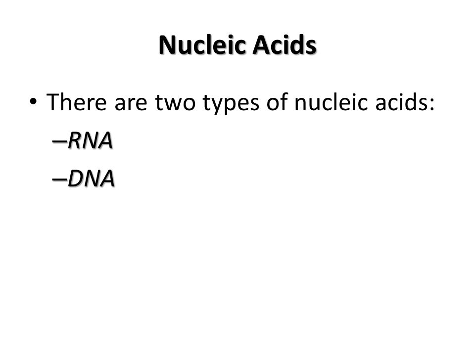 Nucleic Acids There are two types of nucleic acids: RNA DNA