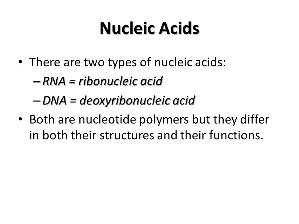 Nucleic Acids There are two types of nucleic acids: