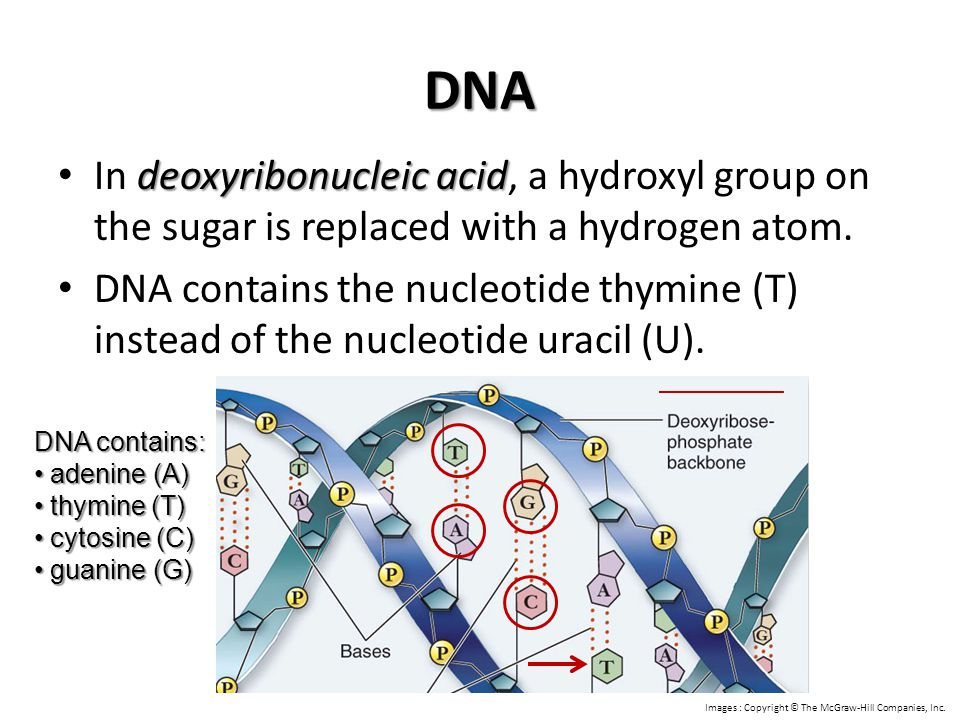 DNA In deoxyribonucleic acid, a hydroxyl group on the sugar is replaced with a hydrogen atom.