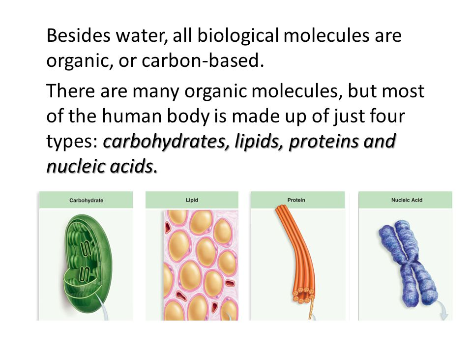 Besides water, all biological molecules are organic, or carbon-based