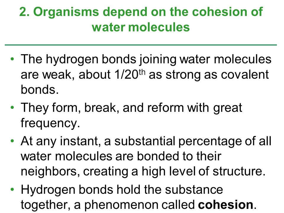 2. Organisms depend on the cohesion of water molecules
