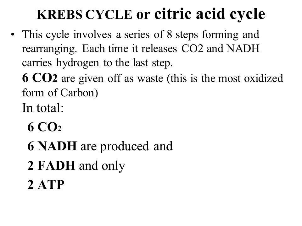 KREBS CYCLE or citric acid cycle