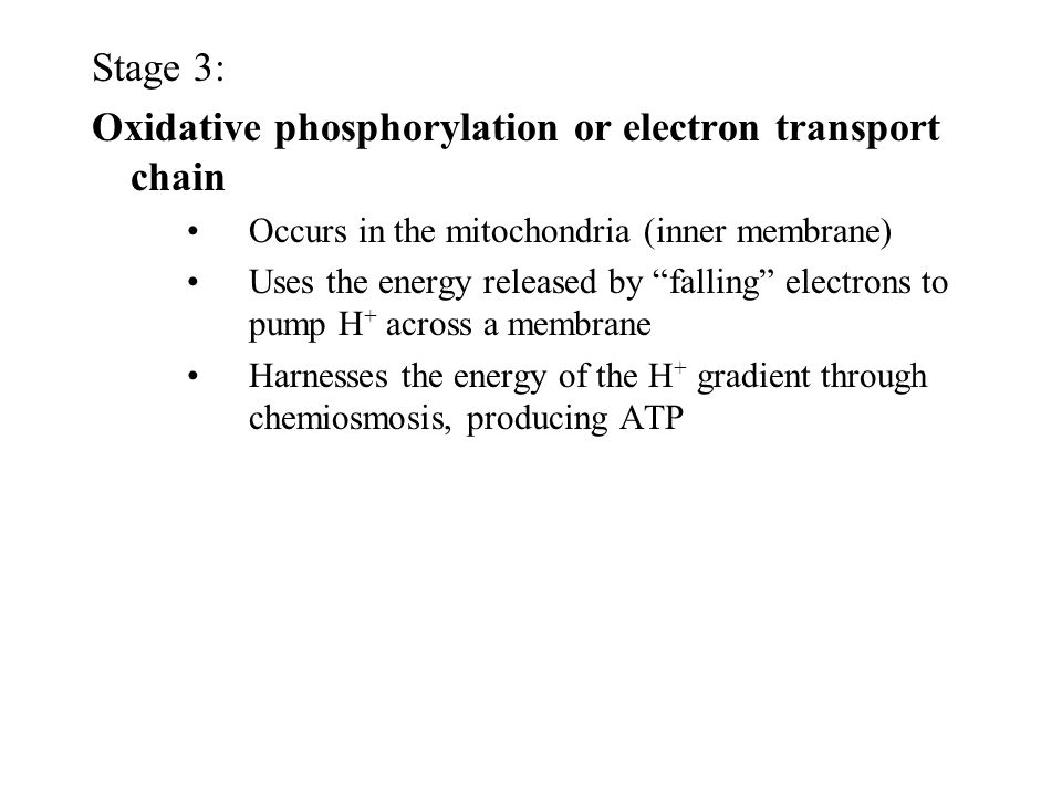 Oxidative phosphorylation or electron transport chain