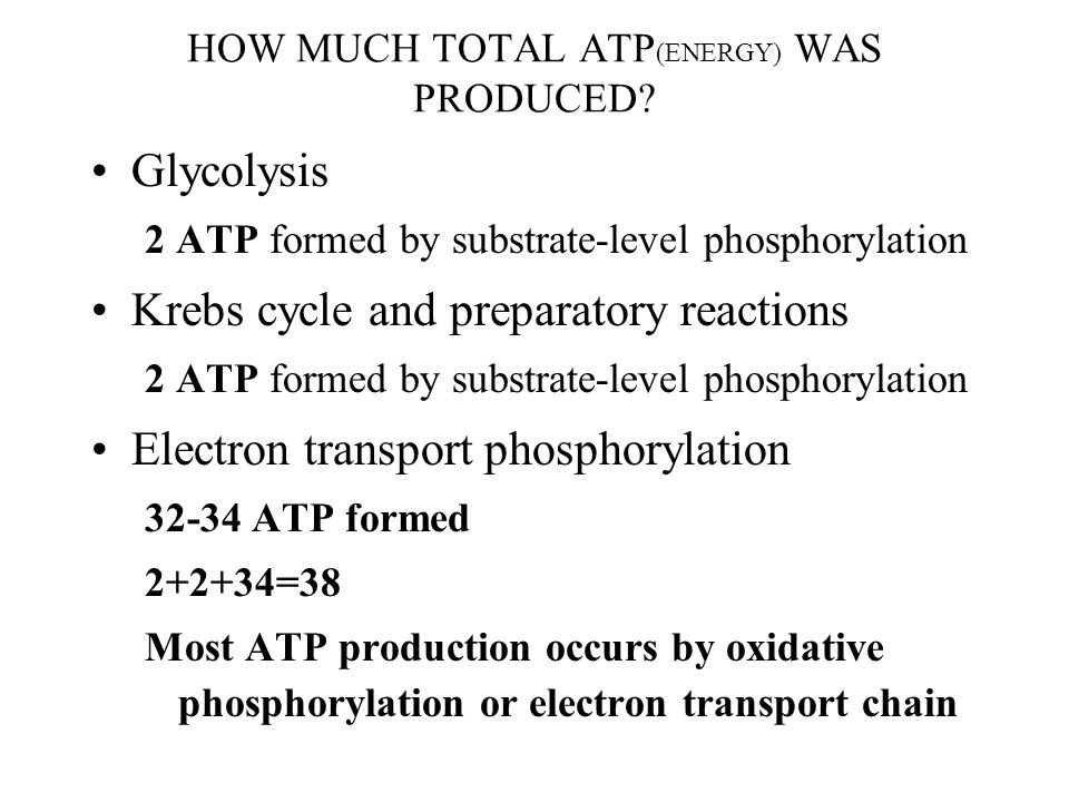 HOW MUCH TOTAL ATP(ENERGY) WAS PRODUCED