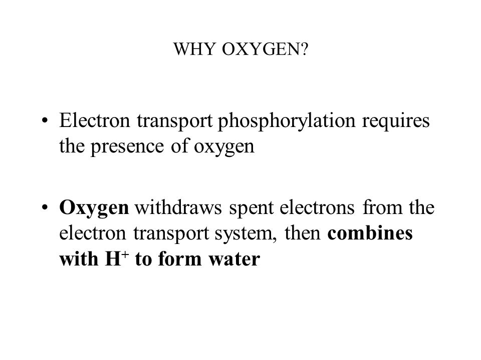 Electron transport phosphorylation requires the presence of oxygen