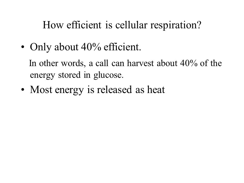 How efficient is cellular respiration