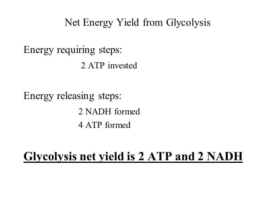 Net Energy Yield from Glycolysis