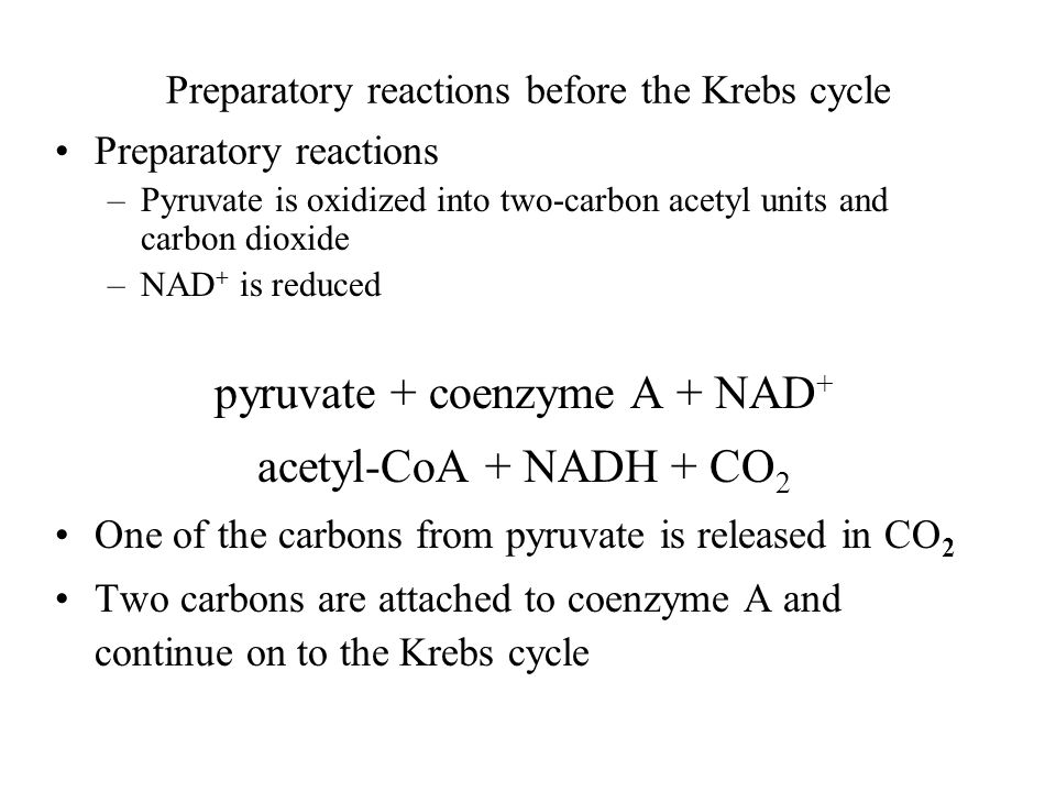 Preparatory reactions before the Krebs cycle