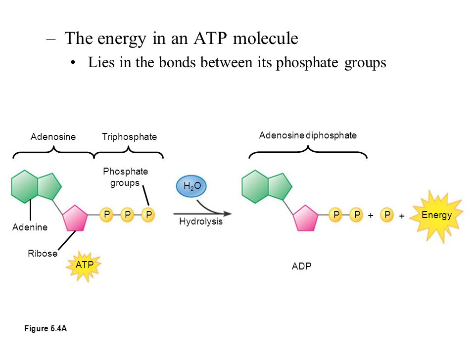 The energy in an ATP molecule