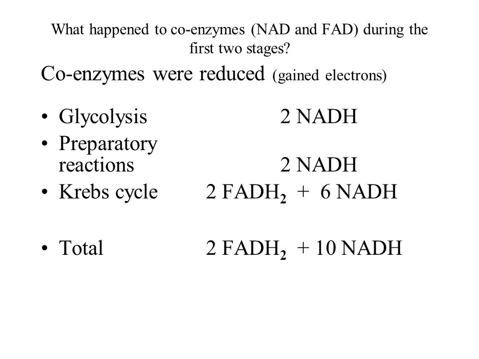 What happened to co-enzymes (NAD and FAD) during the first two stages