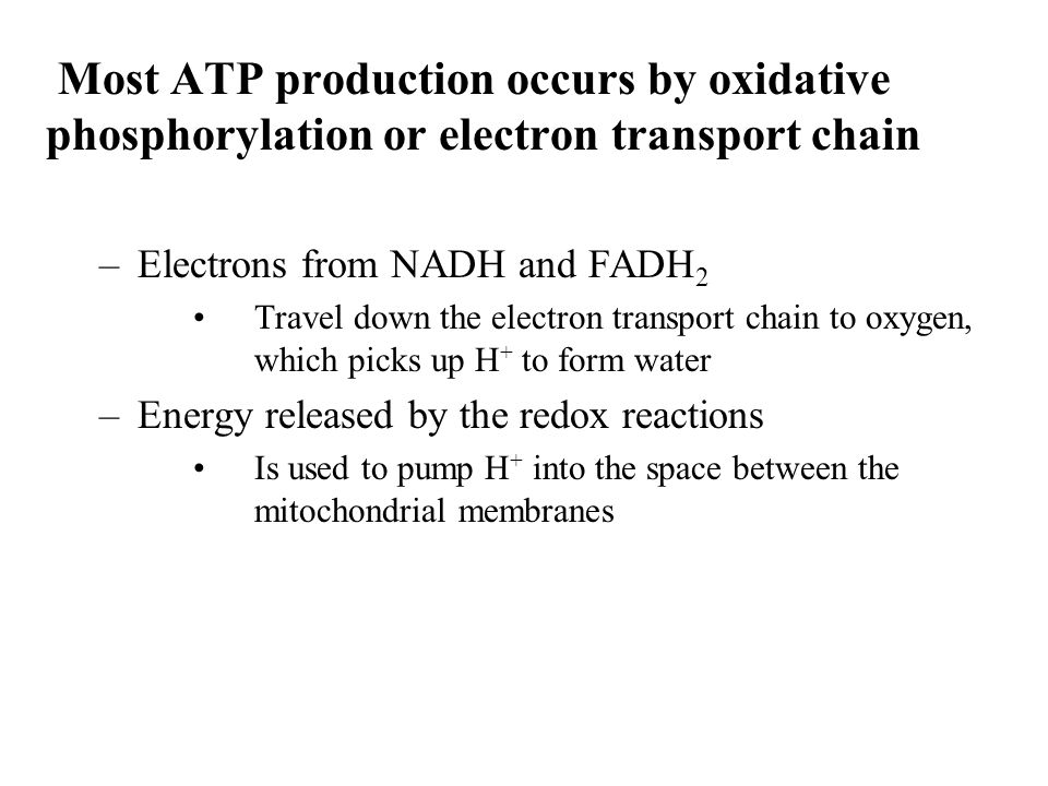 Most ATP production occurs by oxidative phosphorylation or electron transport chain Electrons from NADH and FADH2.