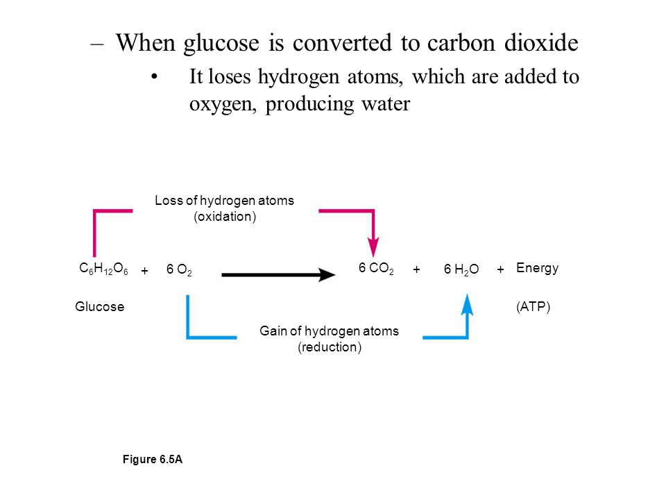 When glucose is converted to carbon dioxide
