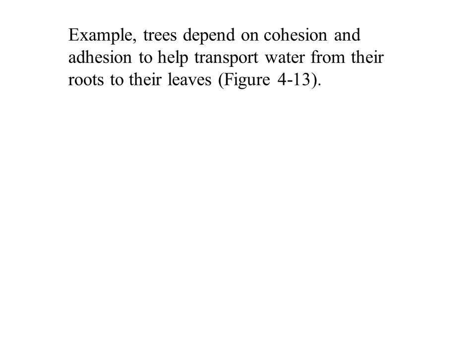 Example, trees depend on cohesion and adhesion to help transport water from their roots to their leaves (Figure 4-13).