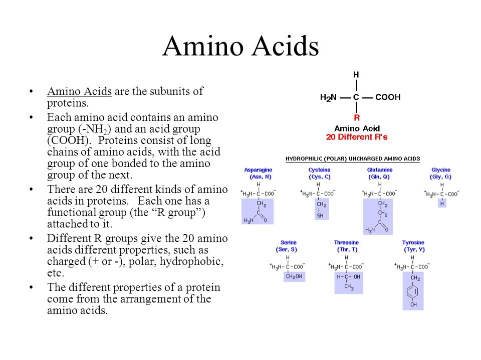 Amino Acids Amino Acids are the subunits of proteins.