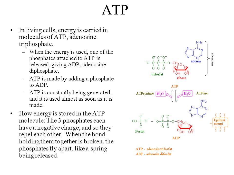 ATP In living cells, energy is carried in molecules of ATP, adenosine triphosphate.