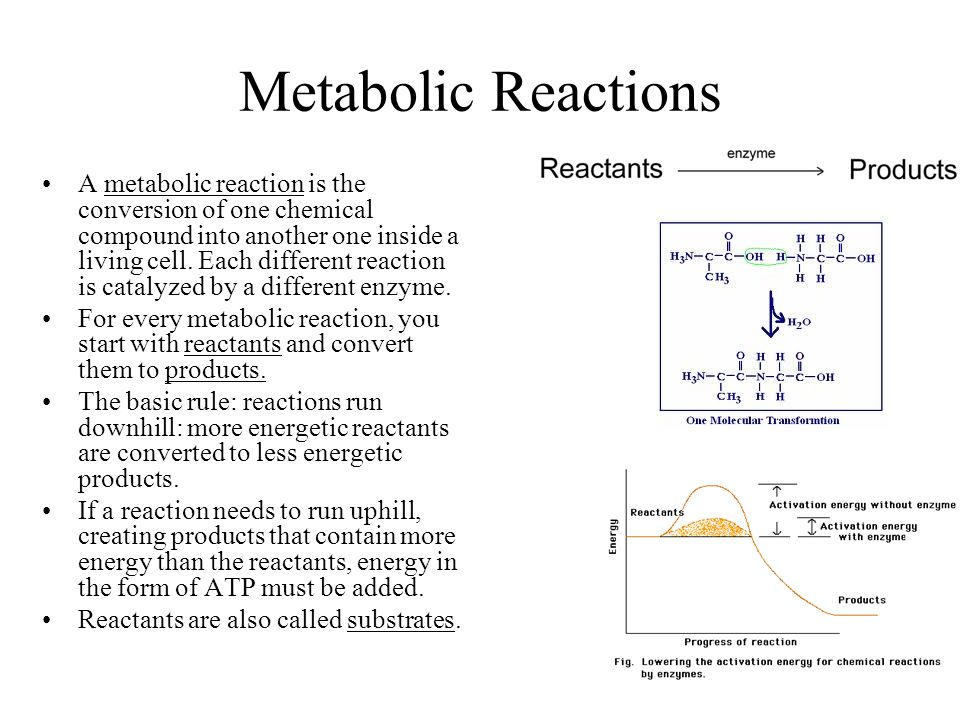 Metabolic Reactions
