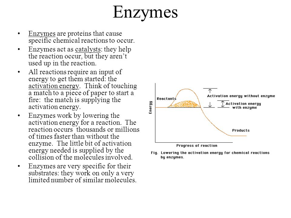 Enzymes Enzymes are proteins that cause specific chemical reactions to occur.