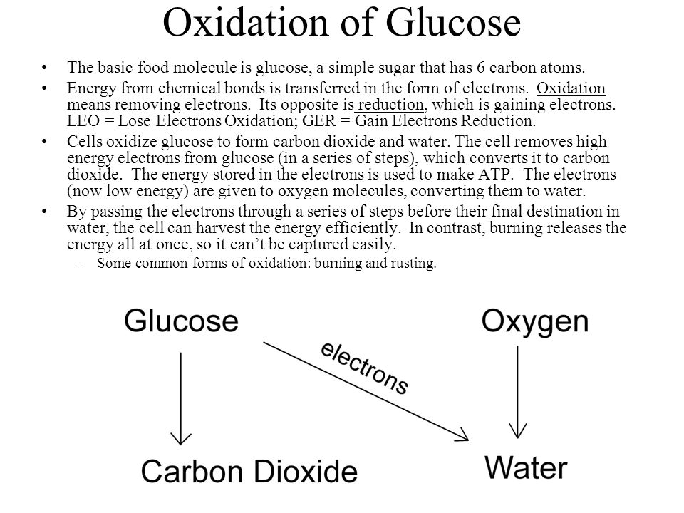 Oxidation of Glucose The basic food molecule is glucose, a simple sugar that has 6 carbon atoms.
