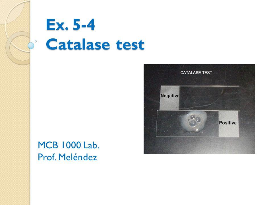 Ex. 5-4 Catalase test MCB 1000 Lab. Prof. Meléndez