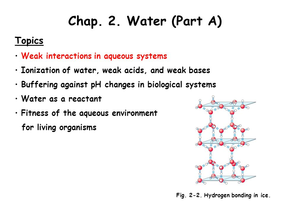 Chap. 2. Water (Part A) Topics Weak interactions in aqueous systems