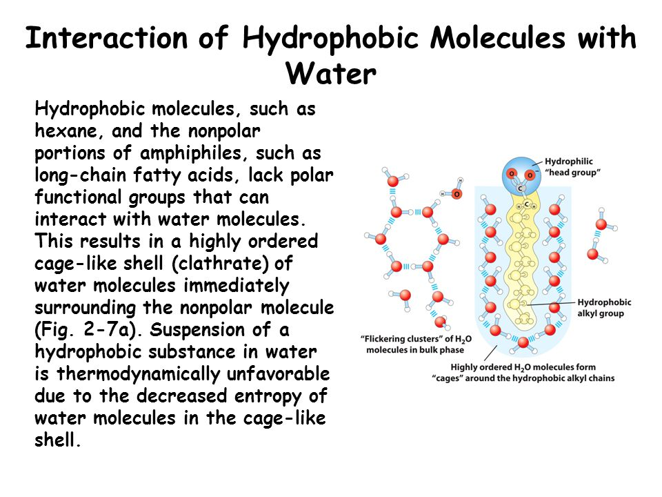 Interaction of Hydrophobic Molecules with Water