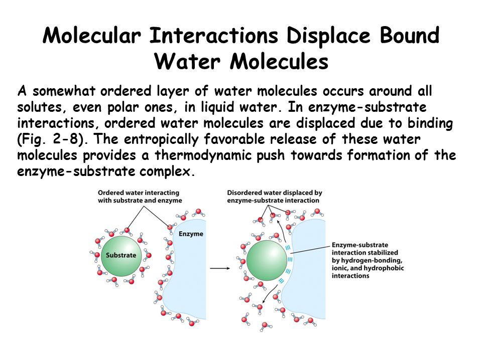Molecular Interactions Displace Bound Water Molecules