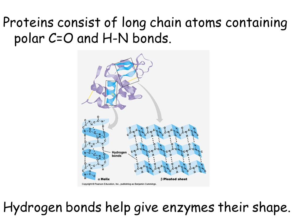 Proteins consist of long chain atoms containing polar C=O and H-N bonds.