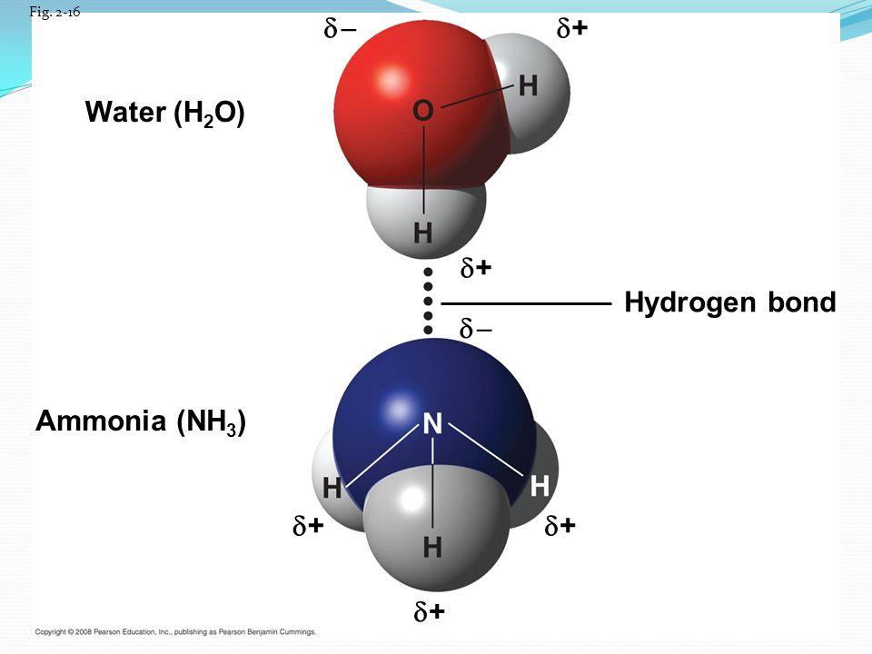   + Water (H2O) + Hydrogen bond   Ammonia (NH3) + + +