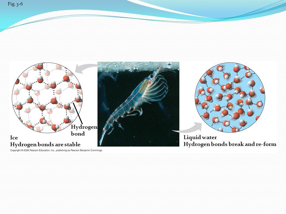 Hydrogen bonds are stable Liquid water